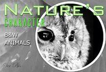 AW-B&W Animals