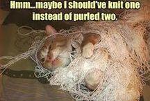Knitting Fun!