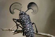 Bhuna's Beetles / Collecting inspiration for my next illustration project.