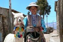 Meet your Alpacas