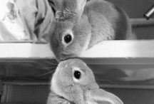 Bunny Life / Thinking to do and make to care for all pets