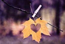 Autumn Weddings / Nunti de toamna
