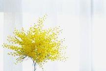 * Spring *