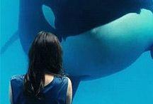 ♥ Orca ♥