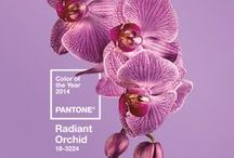 Radiant Orchid / Purple hues, soft lavender shades and luxurious plum tones... Pantone of 2014. / by Prestigious Textiles