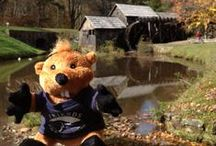 Grover Groundhog / The official mascot for Friends of the Blue Ridge Parkway, Grover Groundhog, loves traveling the parkway and helping kids learn!