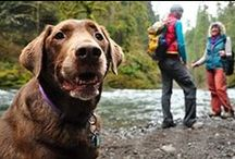 Pets in Parks / Dogs love National Parks too! Here are tips, gear and all things canine for outdoor adventures with Fido!