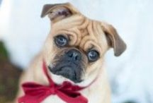 Weddings Day Pets / May not be for everyone but some people would not think of having their wedding with out them ... Here is to your furry family. Dog love, dogs and wedding