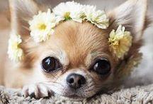 ▲ Fashion Dogs