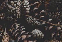 Höst och vinter
