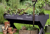 HomeSpot HQ - Yard and Garden / Tips for keeping the yard green and the garden colorful. / by HomeSpotHQ