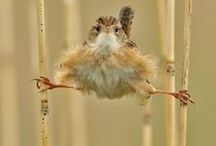 cute animals - szemrevalóságok / funny and interesting pics about animals