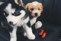 ⇥ furry friends ⇤ / animals /  if you spam pls follow ♡
