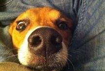 Dogz ♥