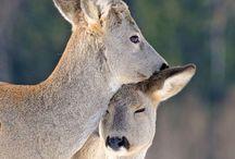 Oh Deer / by Mirjam Otten