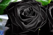 The Secret Garden / Faerie Gardens, Hidden Gardens, English Gardens...  garden love!