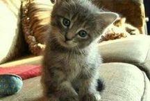 Meow / I love Kittens
