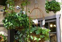 Garden Project Ideas