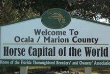 Ocala / Marion County / surrounding areas / Pins from the Ocala, Marion County and surrounding areas.