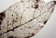 Decay / Autumn Foliage - The season of decay.