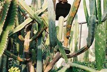 cacti / My favorite plants