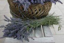 Lavender & Time