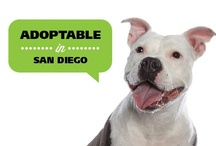 San Diego Adoptable Dogs / Each of these dogs are living in foster homes in the San Diego area awaiting an adoptive home. If you are interested in learning more about one of these dogs, please email info@evenchance.org