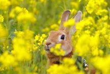 Conejos♥