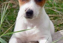 ANIMALS & PETS/ANIMALES Y MASCOTAS