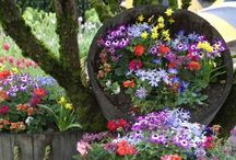 Gardens / All about them. Landscaping, tips, trees, flowers etc