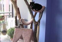 cat - heaven