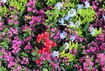 Paisajes y flores / Sencillamente paisajes