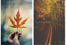 Autumn / Bring the colors of autumn inside.