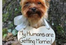 Weddings   Cute Ideas / Cute ideas for my future wedding!