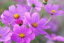 kwiatkowo