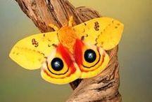 Ćmy i motyle piękne przez chwilę...