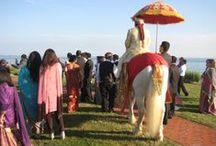 Baraat Horses / Baraat Horses and Costumes