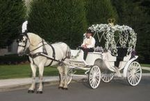 Cinderella Carriage / Cedar Knoll Farm's Cinderella Carriage for weddings, quinceanneras, and other formal events.