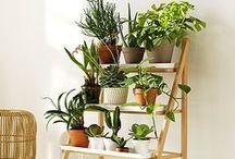 {Balcony gardening}