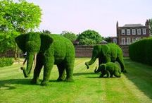 Amazing Topiaries / by Bella Marie