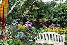Subtropical Garden Ideas / To add to my subtropical garden