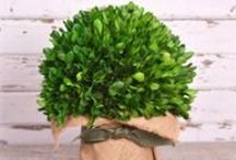 Garden Boxwood / by Bella Marie