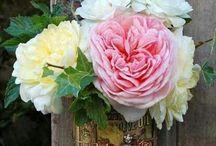 Flower Power / Flowers  / by Rochelle Clipper