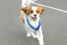Cute dogs ♥ / by Brigitte ♥