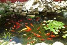 Koi Pond and Water Garden / Not much is more relaxing or tranquil than sitting by your backyard pond and water garden watching koi fish, turtles, frogs glide about water lilies. Get ideas and buy supplies at www.BuildAPond.net