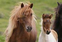 caballos / caballos