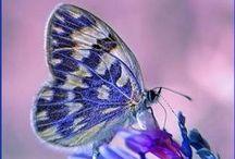 .:Butterflies:.