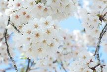 .:Flowers:.
