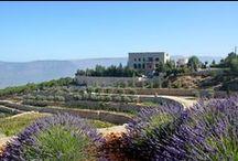 Voyage au Liban Juillet 2013 / Quelques photos prises lors de mon déplacement au Liban en Juillet 2013 pour travailler avec mon client le Château Florentine