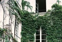 windows / • windows •